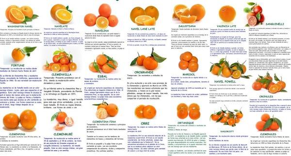 """""""¿Cuántas variedades de #naranjas ? conoces? ¿Serías capaz de diferenciarlas? Te lo ponemos fácil"""